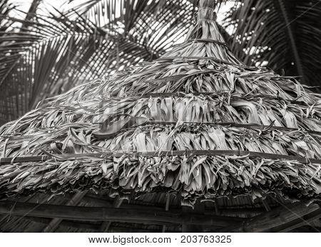 flip-flops on the sand of a beach umbrella Palm b&w Coconut Palm tree