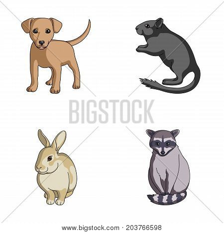 Puppy, rodent, rabbit and other animal species.Animals set collection icons in cartoon style vector symbol stock illustration .