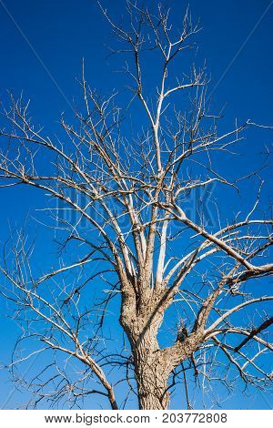 A Dry Tree Over A Blue Sky, Valconca, Italy