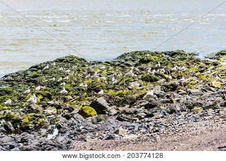 Rocky Beachshore On Saint Lawrence River In Saint-irenee, Quebec, Canada In Charlevoix Region With S