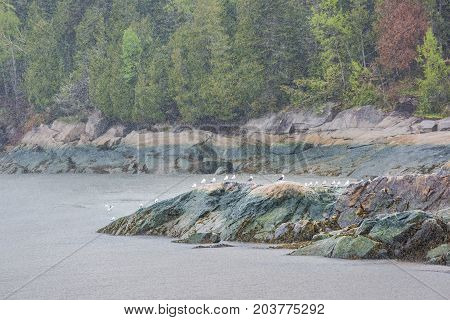 Port-au-persil, La Malbaie, Canada Saint Lawrence River In Charlevoix Region In Quebec With Flock Of