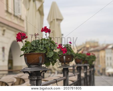 Red Geranium Flower Pots On Restaurant Garden Fencing On Old City Street