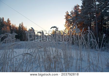 Winter scene .Frozenned flower   snowdrift  white, wonderland