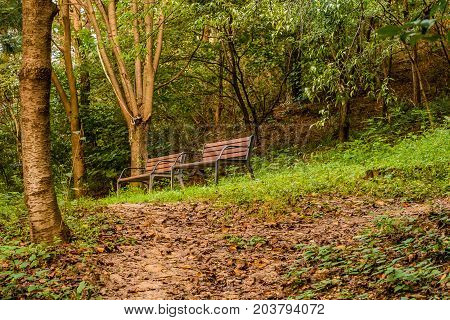 Two wooden park benches under tress next to a trail in a wooded area