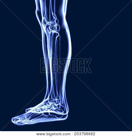 3D Illustration of Human Body Bone Joint Pains Anatomy (Leg Joints and Bones)