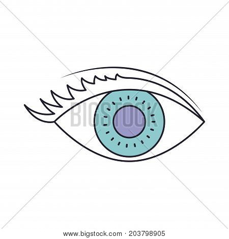 eye with eyelashes in color section silhouette vector illustration