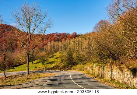 Trees By The Road In Late Autumn At Sunrise