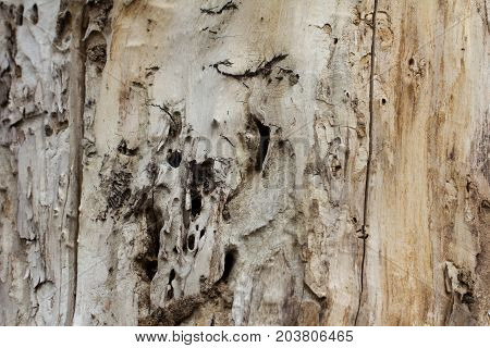 Background of old wood eaten by rodents