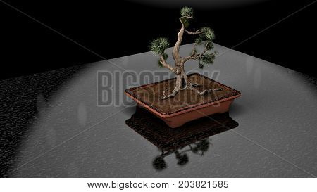 3D rendering.Coniferous bonsai classic shape. Rectangular pot in Oriental style. A perennial tree for the house. Japanese and Chinese art.
