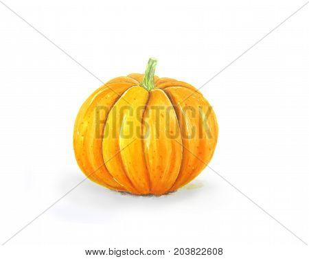 Hand drawn orange pumpkin isolated on white background