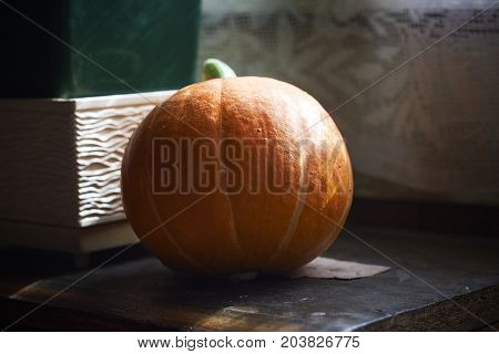 orange pumpkin fruit in high contrasted background close up