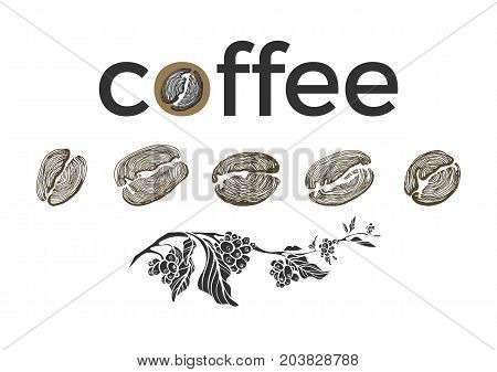 Set of different coffee beans and branch of tree with leaves on white background. Organic product. Vector collection. Sketch. Illustration isolated and grouped for easy editing eps.10