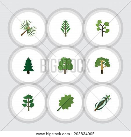 Flat Icon Nature Set Of Park, Forest, Alder And Other Vector Objects