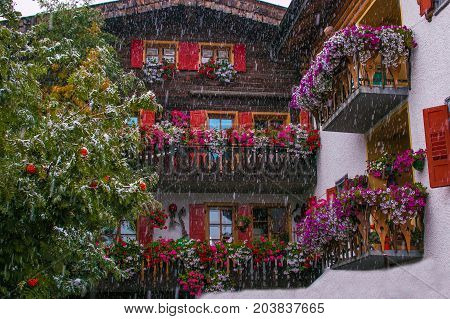 Snow and flowers in the center of Livigno. Traditional mountain chalet, Lombardy