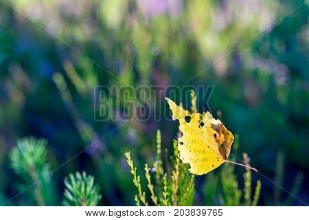 the nature in the fall and one fallen-down yellow leaf from a tree is located in the foreground on an indistinct background