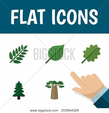 Flat Icon Nature Set Of Linden, Acacia Leaf, Park And Other Vector Objects