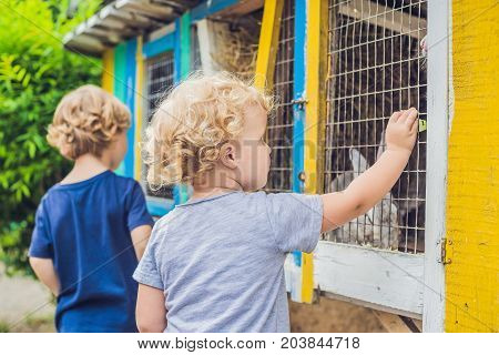 Girl And Boy Are Fed Rabbits In The Petting Zoo