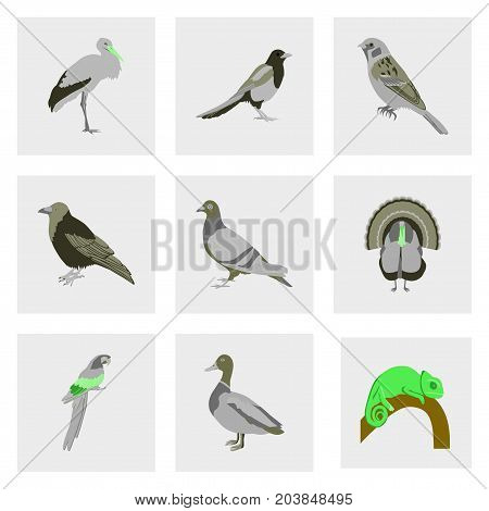 Set of vector illustration in flat style birds