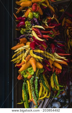 variety of hot peppers of different colors