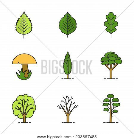 Trees color icons set. Poplar, birch, oak leaves and trees, mushroom, pine. Isolated vector illustrations