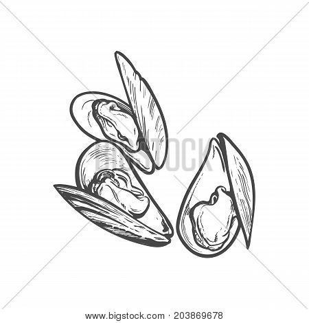 vector sketch cartoon sea mussel, oyster. Isolated illustration on a white background. Sea delicacy food concept