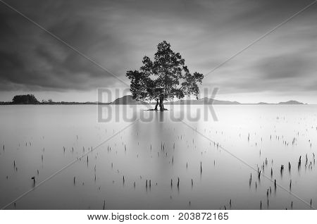 lonely tree in the black and white mood
