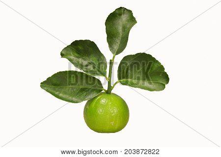 Thai Grace Of Lemons