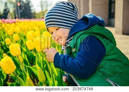 Toddler boy smelling tulip in the garden at the spring sunny day