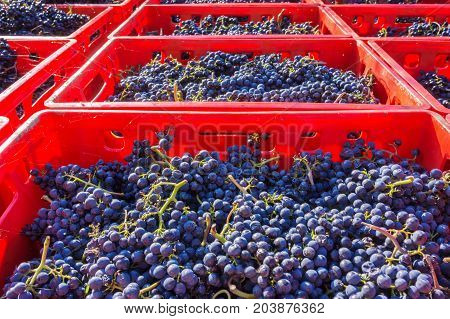Read red wine in boxes loaded Flisch
