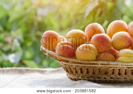 Wicker Basket Apricot Lies On A Table On The Background Of Green Branches, Daylight