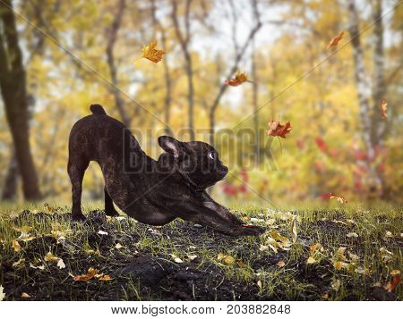 Funny dog hunts for the falling autumn leaves. Funny pose of the dog