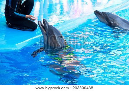 Dolphins On Creative Entertaining Show At Dolphinarium With Full House Of Visitors Show Amazing Tric