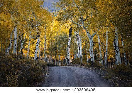 Autumn Road - Colorado Rocky Mountain Scenic Beauty