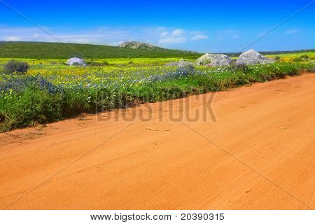 Dirt road among bright spring wild flowers field in West Coast National Park, South Africa