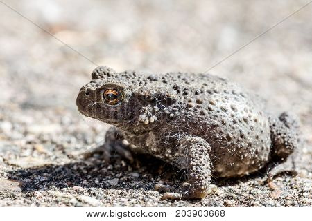 closeup of a grey toad on the stone floor
