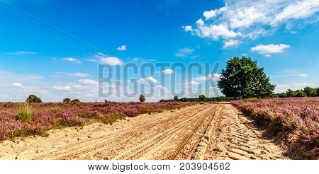 sand path between the purple heath with a blue sky