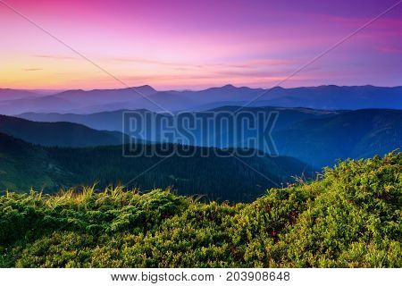 Under the purple sky lay down mountain hills covered with creeping pines and firs surrounded by mystical haze.