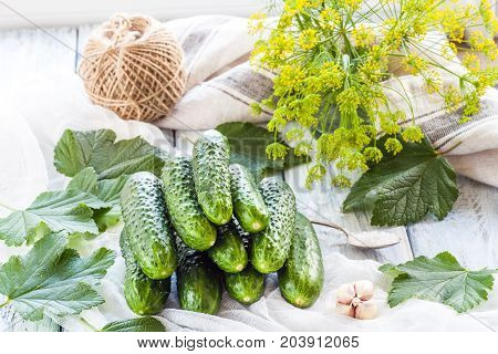 Young green small cucumbers for pickling. Marinated and canned food. Organic fresh vegetables in high key on light wooden background. Preparation for canning. Summer Pickles.