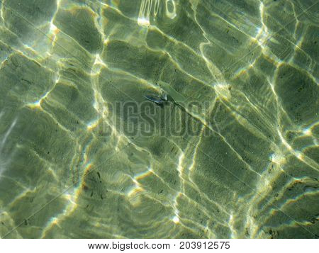Emerald sea water with fish and mussel