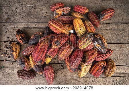 whole cocoa pods in the Amazon area of Ecuador