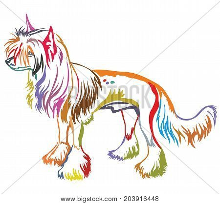 Colorful decorative portrait of standing in profile Chinese Crested Dog vector isolated illustration on white background