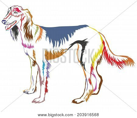 Colorful decorative portrait of standing in profile Persian Greyhound (Saluki) vector isolated illustration on white background