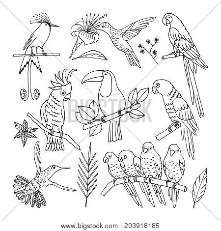 A realistic hand-drawn contour collection of beautiful exotic tropical birds with palm leaves. Ara, hummingbird, toucan, parrot.