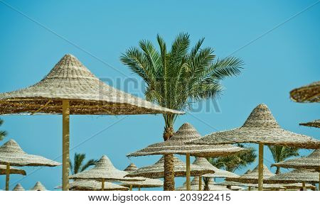 Sunny blue sky at resort. Umbrella and beach. Beach straw umbrella with palm tree. Summer vacation and traveling. Relax and holiday.