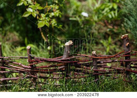Wattle in the green garden. Small Fence made of weaving thin branches
