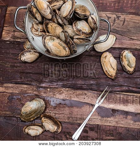 Steamer clams from New England in a whiten collider on a rustic table ready are cleaned and ready for cooking.