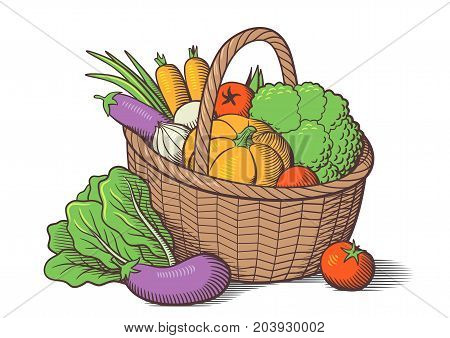 Vegetables in basket. Stylized colored vector illustration. Cabbage pumpkin eggplants tomatoes onion carrots broccoli lettuce
