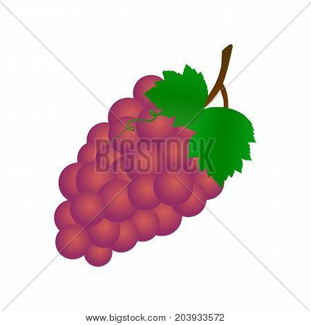 Bunch of grapes with leaves. Vector realistic icon.