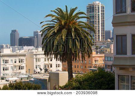 San Fransisco Innenstadt  Skyline Palme City  Stadt