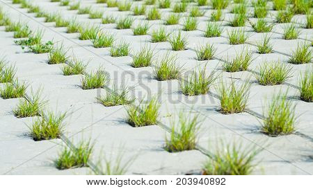 The Path is Paved with a Grey Concrete Cobblestones with Holes for Grass. Perspective View. Grey Cobblestone in a Lattice Shape and Grass in the Holes. Landscaping Element Concept